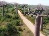 Allée des baobabs vue du ciel