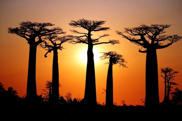 Allée des Baobabs,Morondava