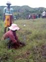 Reforestation communautaire