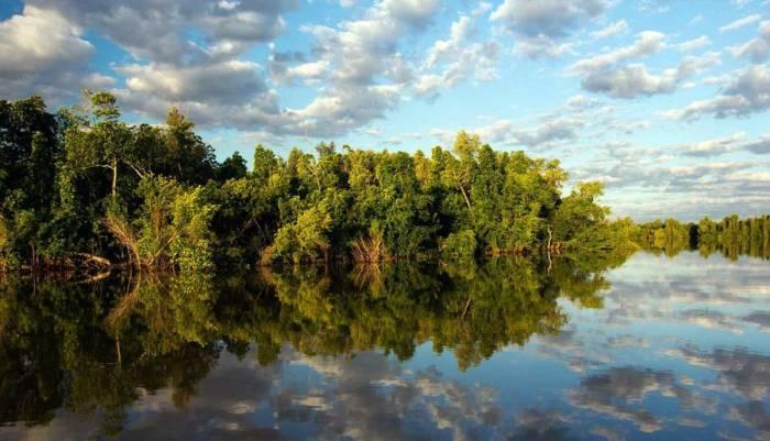 foret-de-mangrove-madagascar.jpg